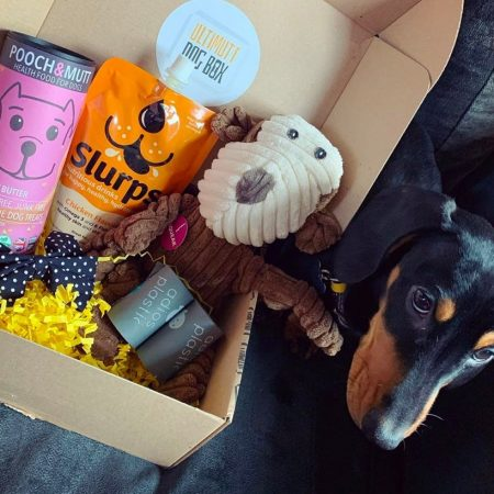 Monthly Dog Box
